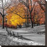 Park Pretty I Stretched Canvas Print by Assaf Frank