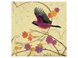 Hooded Oriole Prints