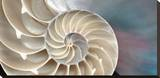 Nautilus Stretched Canvas Print by Andrew Levine