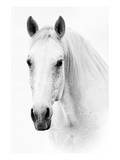 Ghost Equus Prints