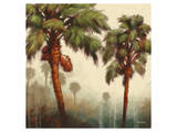 Strictly Palms 05 Prints by Kurt Novak