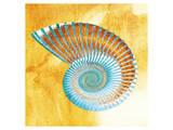 Nautilus Prints
