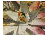 Succulent Melody Prints