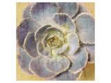 Succulent Aeonium Art