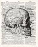 Vintage Anatomy Skull Posters by Christopher James