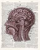 Vintage Anatomy Brain Poster by Christopher James