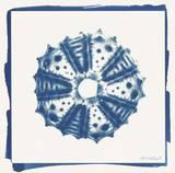 Cyan White Urchin Prints by Christine Caldwell