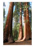 The Three Graces Yosemite Prints