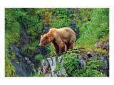 Natural Splendors Alaska 1 Art