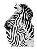 Richard The Zebra Kunst