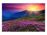 Rhododendron & Summer Mountain Poster