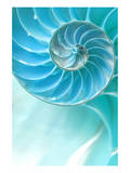 Nautilus Shell Reprodukcje