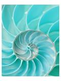 Nautilus Shell II Plakat