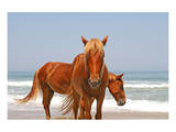 Two wild horses on a beach Prints