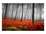 Red Flowers in a Foggy Forest Prints