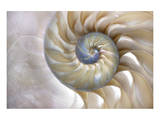 Fibonacci Pattern in Shell Art