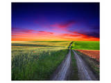 Sunset Over Field with Grass. Prints