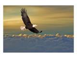 Bald Eagle Flying Above Clouds Affiche
