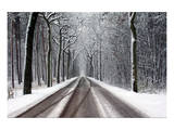 Snow Covered Road & Trees Posters