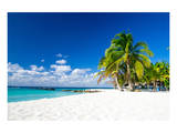 Palm Trees On Tropical Beach Posters