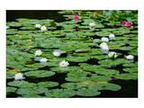 Lilies Heian Jingu ShrineKyoto Posters