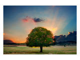 Lone Tree in Cloud Sunset Prints