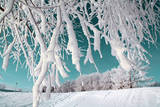 Tree in Snow on Celestial Background Reproduction photographique par  basel101658