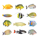 Great Collection of a Tropical Fish on a White Background. Photographic Print by  Kletr