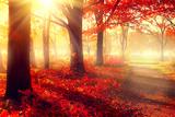 Autumn. Fall Scene. Beautiful Autumnal Park. Beauty Nature Scene. Autumn Trees and Leaves, Foggy Fo Fotografisk trykk av Subbotina Anna