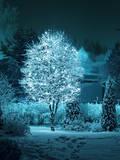 Illuminated Tree in Winter Garden Papier Photo par  Hannuviitanen