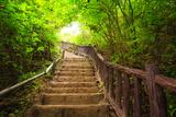 Stairway to Forest, Erawan National Park,Kanchanburi,Thailand Photographic Print by  lkunl