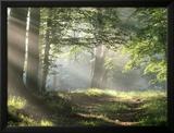 Camino de bosque Láminas