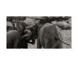 Elephant Fight Photographic Print by Christine Sponchia