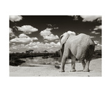 Dancing Elephant Photographic Print by Christine Sponchia