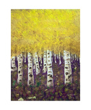 Aspen Forest Photographic Print by Dick Bourgault