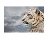 Snowie Photographic Print by Christine Sponchia