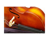 Cello Photographic Print by Erwann Morel