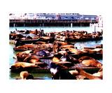 Seal Wharf Reprodukcja zdjęcia autor Glenn Aker