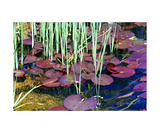 Lily Pond Photographic Print by Dick Bourgault