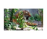 Tiger, Tiger Burning Bright Reprodukcja zdjęcia autor Glenn Aker