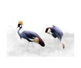 Crowned Cranes Reprodukcja zdjęcia autor Christine Sponchia