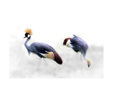 Crowned Cranes Photographic Print by Christine Sponchia
