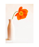 Poppy in Vase Photographic Print by Jodi Orr