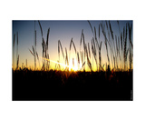 Wallwheatsunset Photographic Print by Erwann Morel