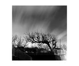 Tree in Yamato, Kanagawa Prefecture, Japan Photographic Print by Francesco Libassi