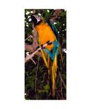 Resplendant Quetzal of Costa Rica Stampa fotografica di Glenn Aker