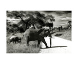 Elefant Momi Photographic Print by Christine Sponchia