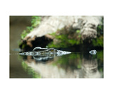 Crocodile Photographic Print by Christine Sponchia