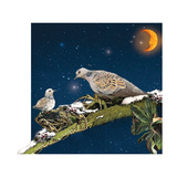 Sleepy Turtledove Photographic Print by Nancy Tillman