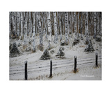 Birch Forest in Winter Photographic Print by Dick Bourgault